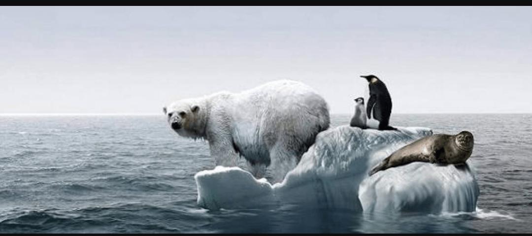 Photo of Kutuplarda Deniz Buzu Yüz Ölçümü Rekor Düzeyde Azaldı